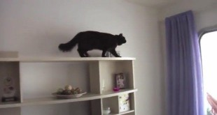 mission-impossible-cat